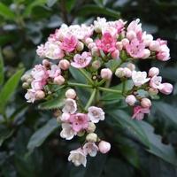 Dla Iwonki pierwsze tegoroczne kwiatki ...