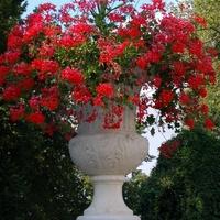 Kwiaty przed Pałacem w Łańcucie