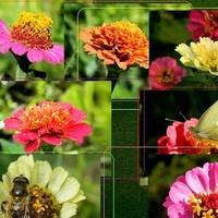 Kwiaty większości ogrodów:)