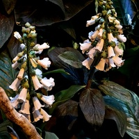Kwiaty z motylarni w.....