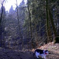 Leśne spacery z leśnym kotem