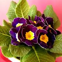 Walentynkowa wiosna :)