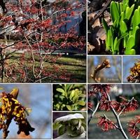 Zwiastuny wiosny....