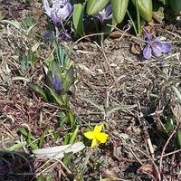 kwitną przekwitają i zakwitną...:)