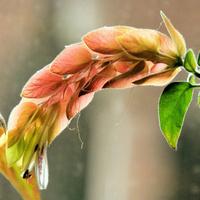 Kwitnie całą zimę :)