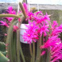 Kaktus z wystawy