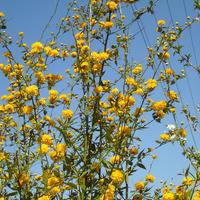 Kwiaty aż po niebo:)