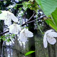 Kwiaty w środku lasu