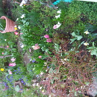 Wiosennie na moim ogrodku