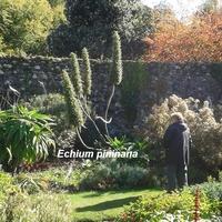 ...z ogrodu botanicznego w Szkocji/Stranraer/