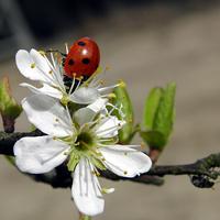dobrała się do nektaru