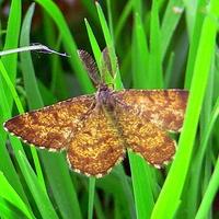 Motyl z własnymi grzebyczkami.