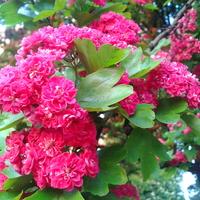 Różowych snów