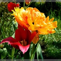 W maju tulisie też się tulą;)