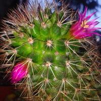 Kaktusik...