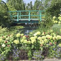 Osiedlowy ogródek