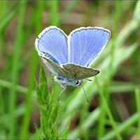 pierwszy motylek w tym roku