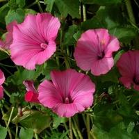 Śliczne różowe kwiaty