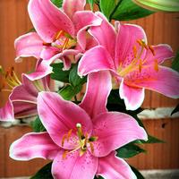 Moje ulubione i pachnace kwiaty :)