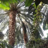 W palmiarni...