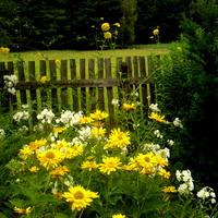 Wiejski ogród ...