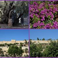 Jerozolima, widoki