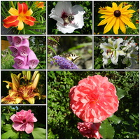 Lilie,róże,liliowce-kwiaty lata.