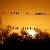 Razem z ptaszkami ....