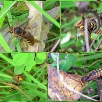 Straszny owad!
