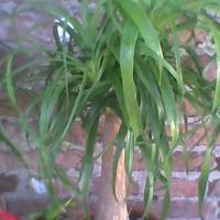 zielona czupryna ;)