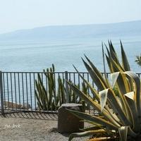 Rośliny nad Jeziorem Galilejskim.