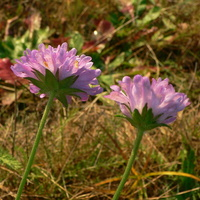 Rzadko widywane październikowe kwiatki