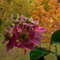 Za oknem jesień...