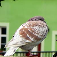 Zimno ptaszkowi.