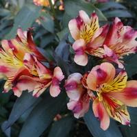 Pozdrawiam miłośników kwiatowej galerii