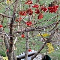 Drzewko z owocami w parku