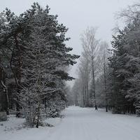 Taką zimę lubię.