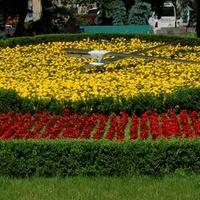 Zegar kwiatowy ze wskazówkami.