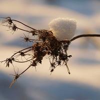 zimowe pajączki .......