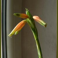 Jedyne kwiatki na parapecie