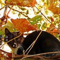 jesienny kotek ...........