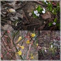 Trochę wiosny jest...