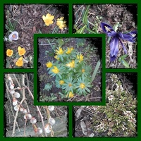 # Pierwszy dzień Wiosny...