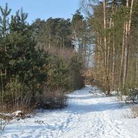 21 marca, Światowy Dzień Lasu
