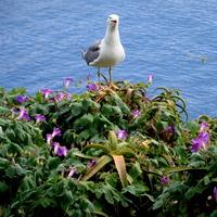 Kwiaty i ptak nadmorski