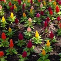Kwiaty z importu