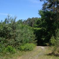 Las w czerwcu