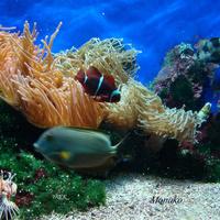 Muzeum Oceanograficzne w Monako cz 2