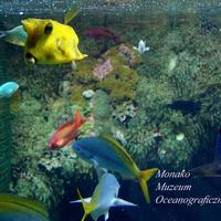Muzeum Oceanograficzne w Monako