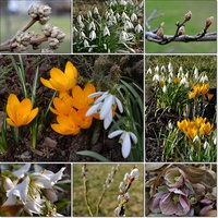 Nieśmiała wiosna ....
